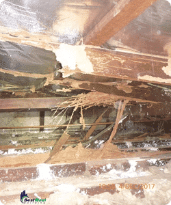 Pre Purchase Timber Pest Inspections