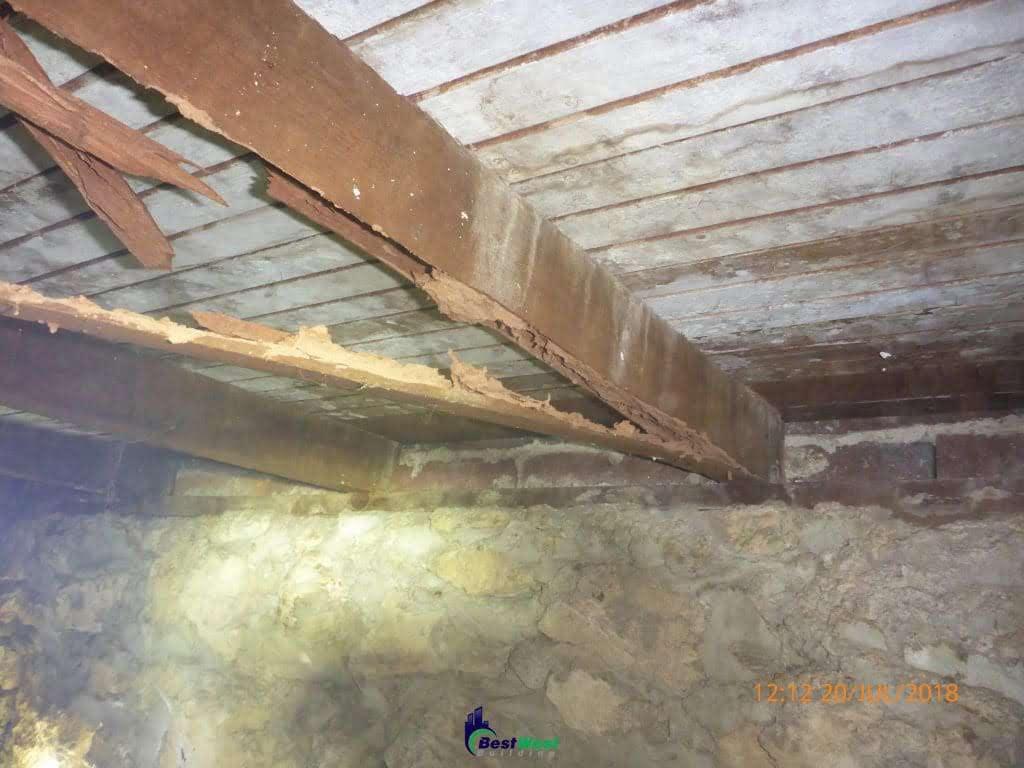 Termite Damages