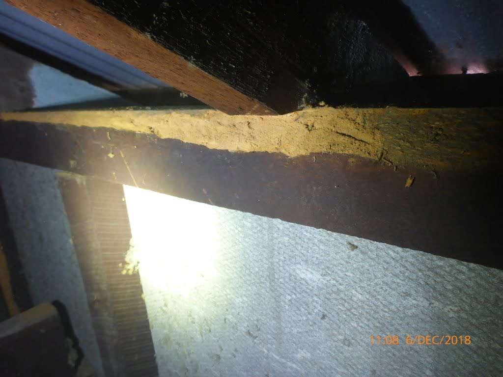 Rare Timber Pest Damage