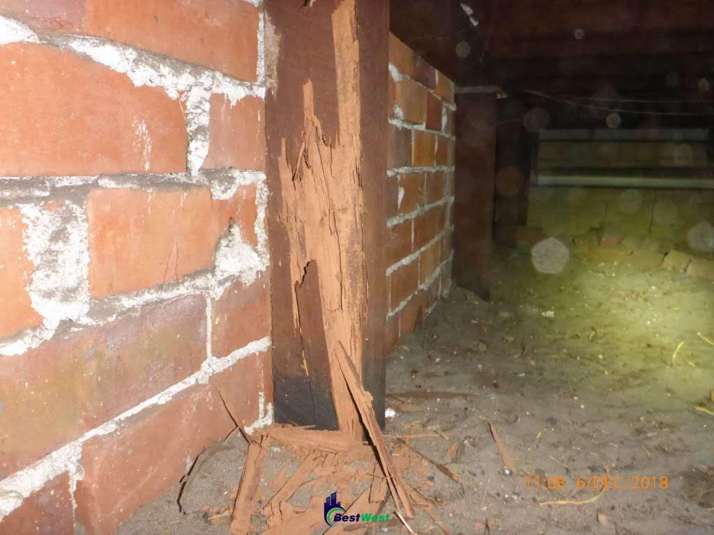 Bestwest Termite Stump
