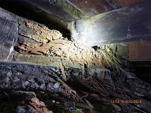 Termite-Damage-MT-Hawthorn-Bestwest-Building2
