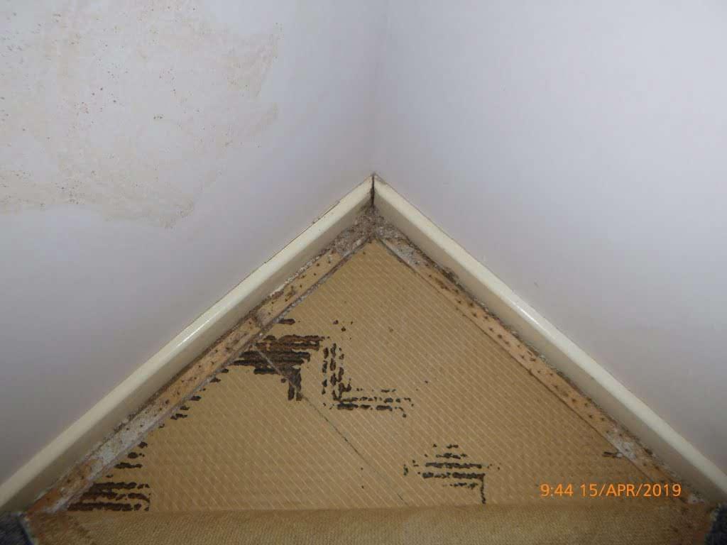 termite damage under carpet