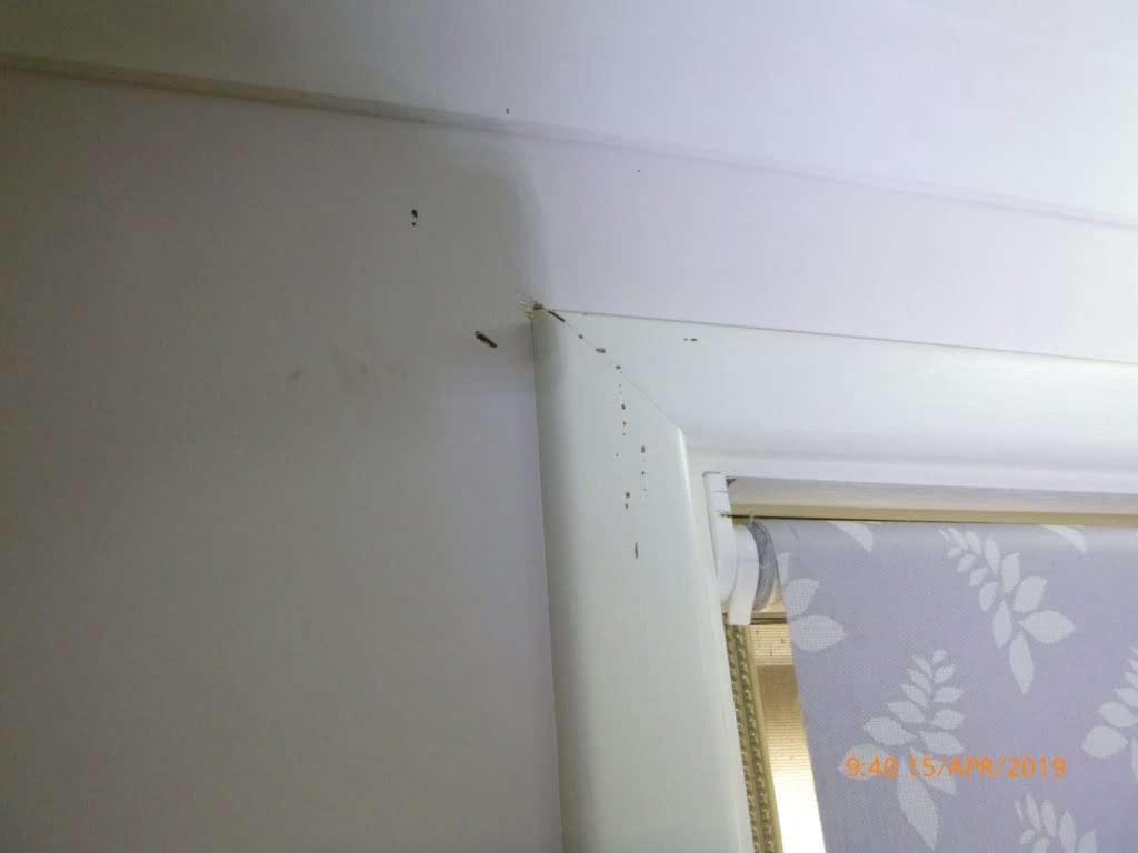 termite damage on window frame