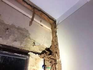Extreme Termite Damage!